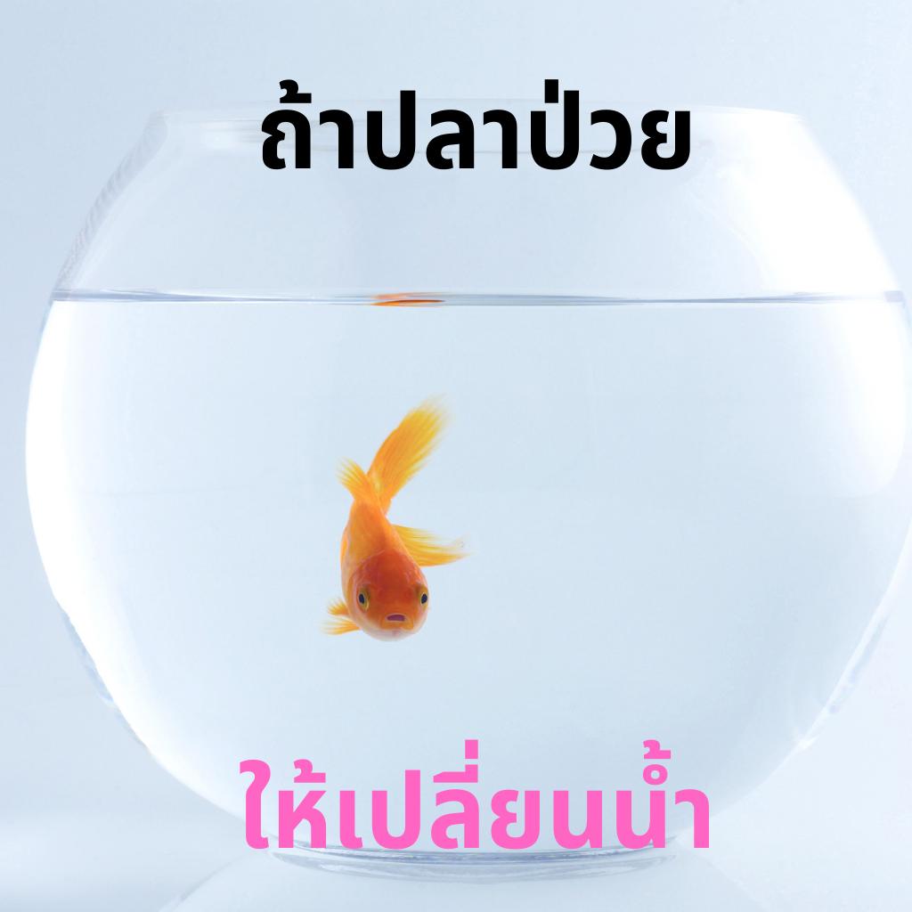 ถ้าปลาป่วย